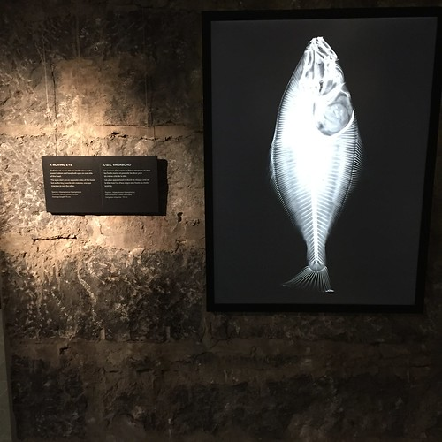 Cool x-rays of fish