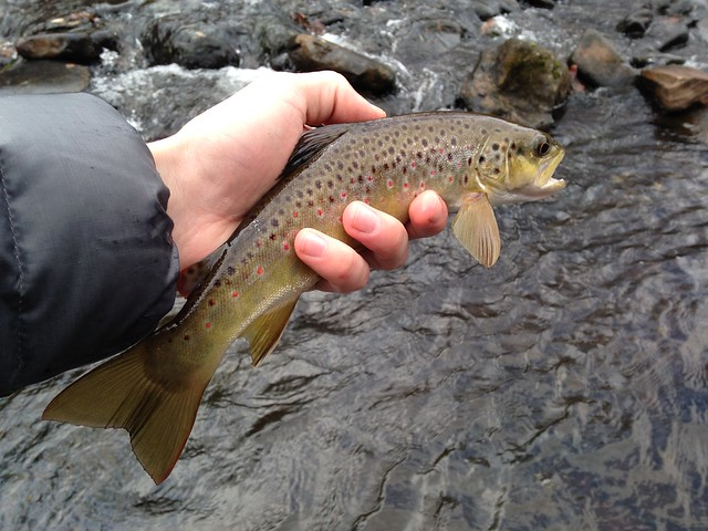 Gunpowder River Brown