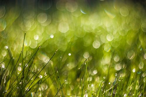 morning light grass canon vintage 50mm bokeh dew sorin romania m42 zenit f18 18 russian 77 helios iarba mutu roua 600d 77m 77m4 mutusorin