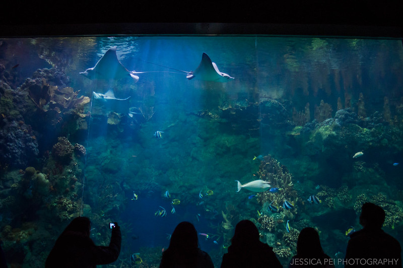 Sting Rays Sea World San Antonio Texas