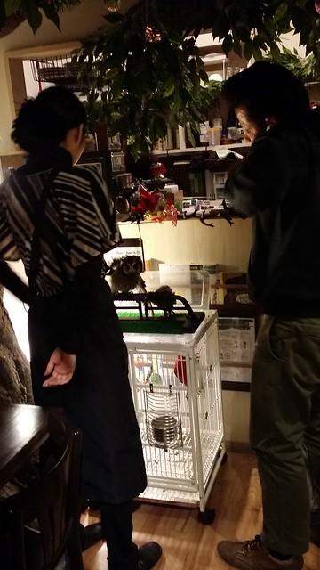 kiba owl cafe 8