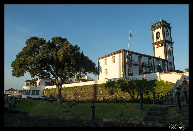 Ayuntamiento y árbol traído de Nueva Zelanda