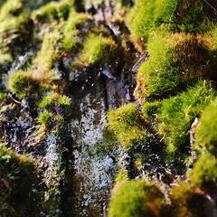 tiny mosshills #exploring #adventure #hiking #nature...