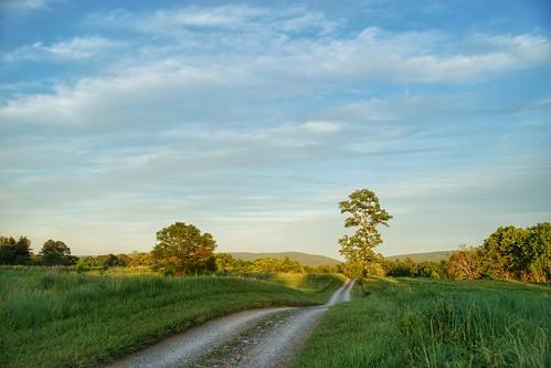 summer tree green goldenhour blandy statearboretumofvirginia