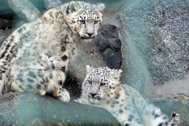 Tierpark Berlin 06.12.2014 67