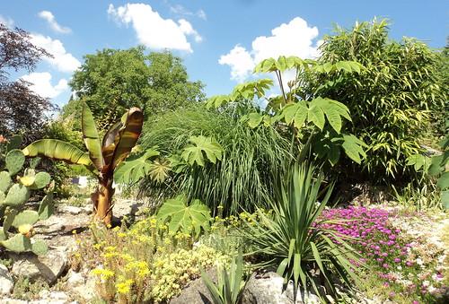 My rockery garden