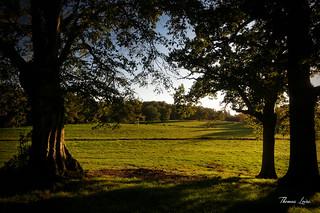 Parc du Plessis à Chaudron en Mauges (2)