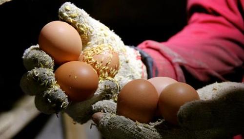 653吃一顆好蛋