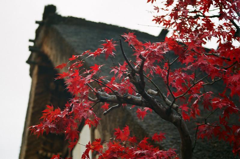 Shirakawa-go, Gassho-zukuri, Gassho Style, Minka, World Heritage Site, UNESCO, Shirakawa, Shirakawa-mura, Gifu, Japan, 合掌村, 合掌造り, がっしょうづくり, 世界遺產, せかいいさん, 文化遺產, 白川, 白川郷, しらかわごう, 岐阜縣, 岐阜県, ぎふけん, 日本, にっぽん, にほん