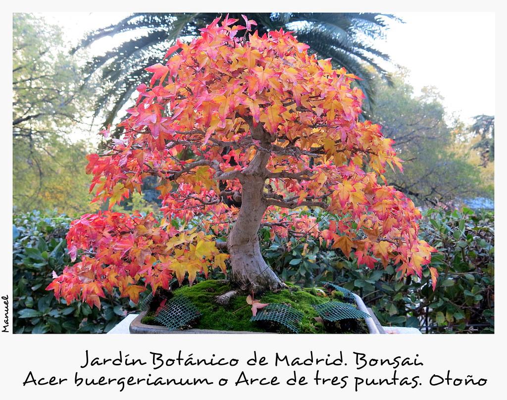 una tarde de noviembre en el jardín botánico de Madrid