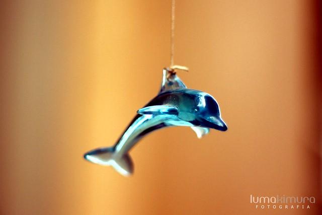 .dolphin.