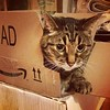 Don't forget to unpack the #cat. #tabbycat #Radley #Amazon #AD
