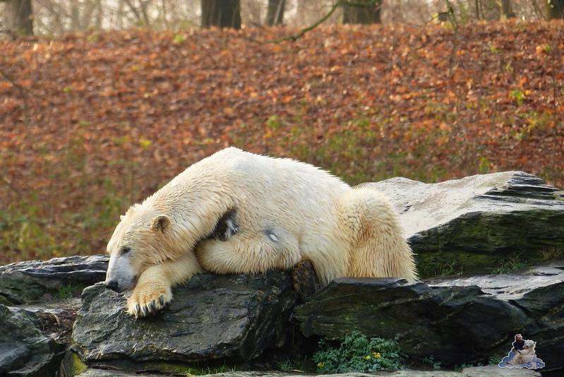 Tierpark Berlin 06.12.2014 50