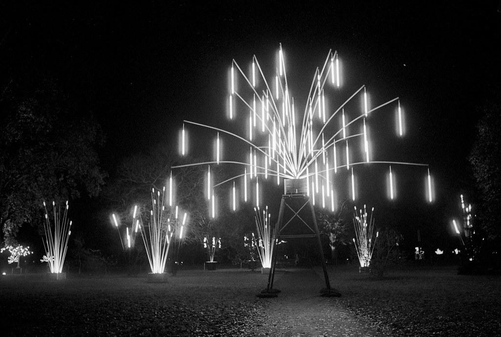 Christmas at Kew 1