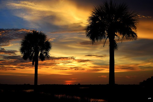 sunset sky sun nature colors silhouette clouds nikon colours florida dusk palm palmtree d5300 nikond5300