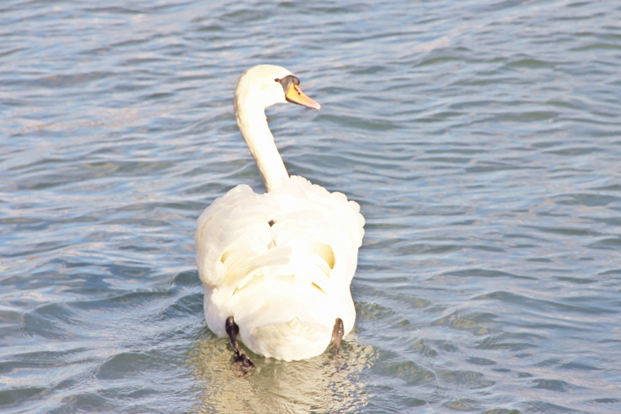 Lac Léman (3)