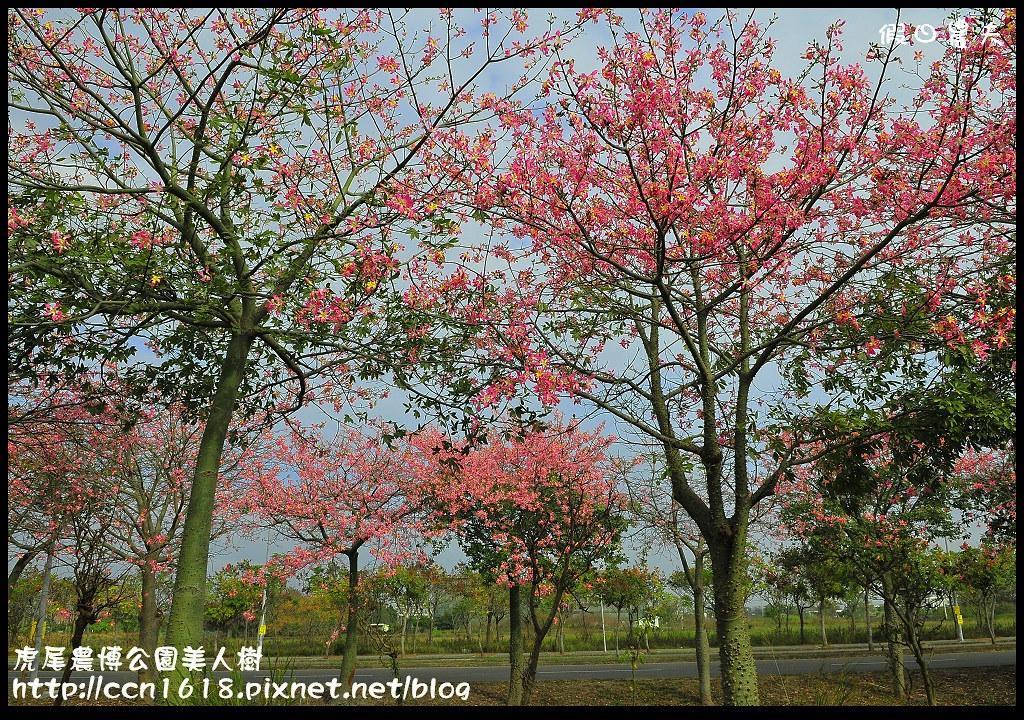 虎尾農博公園美人樹_DSC7521