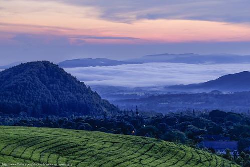 travel sunset mountain sunrise landscape photo foto tea tourist plantation teh bandung gunung subang triana wisata kebun ciater franciscus nananag