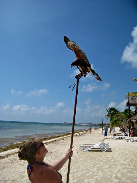 birdsanctuary1