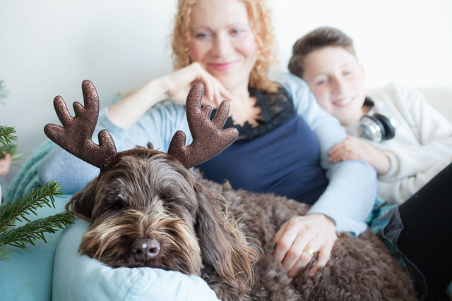 Ewok the Reindeer