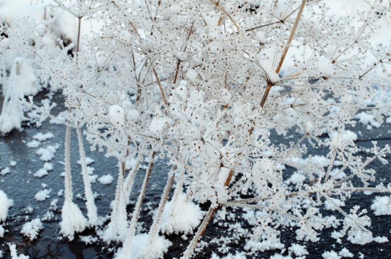 lunta29