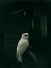 Parrots on Film!