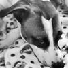 Mutt camouflage. #birddog #hound #ilovemymutt #ilovemydog