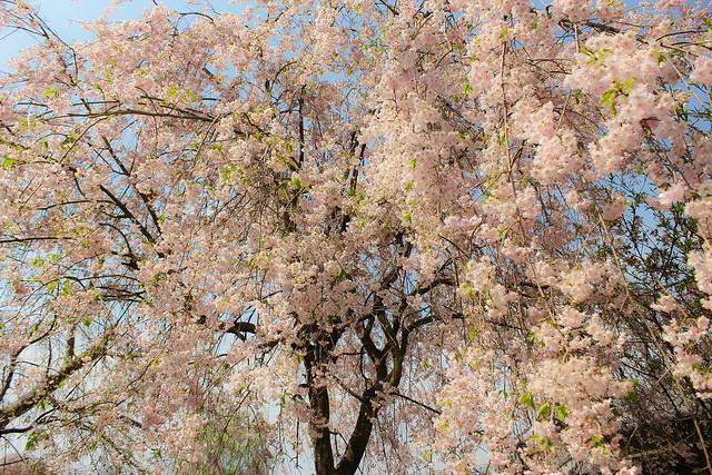 2014-04-19_00071_美の山.jpg