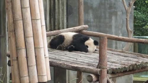 Chengdu-Teil-2-041
