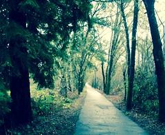 Forestville Pathway