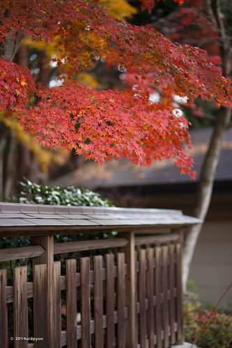 autumn red orange color tree japan canon landscape maple shrine autumnleaves 日本 紅葉 秋 神社 fukushima mapleleaves mapletrees 2014 coloredleaves 福島 福島県 ef85mmf18usm 85f18 eos6d 白河市