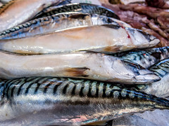 cod(0.0), pacific saury(0.0), sauries(0.0), forage fish(0.0), tilefish(0.0), bonito(0.0), barramundi(0.0), sardine(0.0), milkfish(0.0), animal(1.0), mackerel(1.0), fish(1.0), fish(1.0), seafood(1.0), oily fish(1.0), food(1.0),