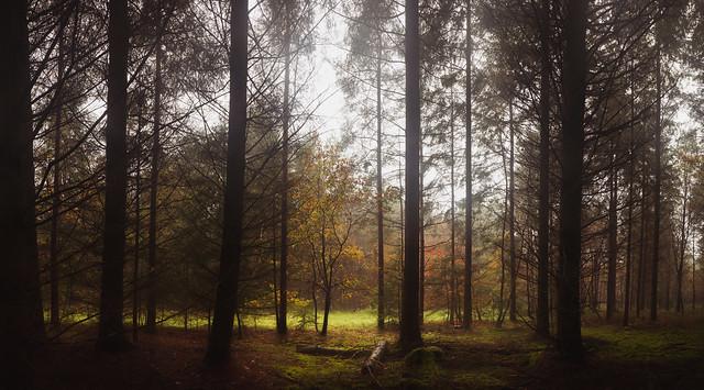 Thetford Forest 22/11/14