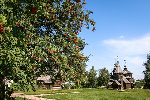 Wooden church and rowan trees, Suzdal, Russia スズダリ、木造建築博物館の教会とナナカマド