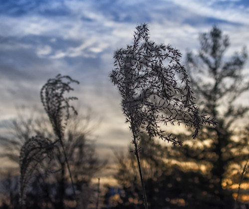 sunset sky toronto tree olympusstylus1