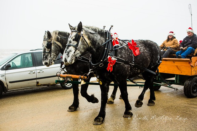 20141213-HolsteinChristmasParade-WM-17
