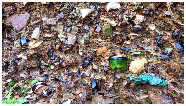 BEACH GLASS WAITING TO BE BORN