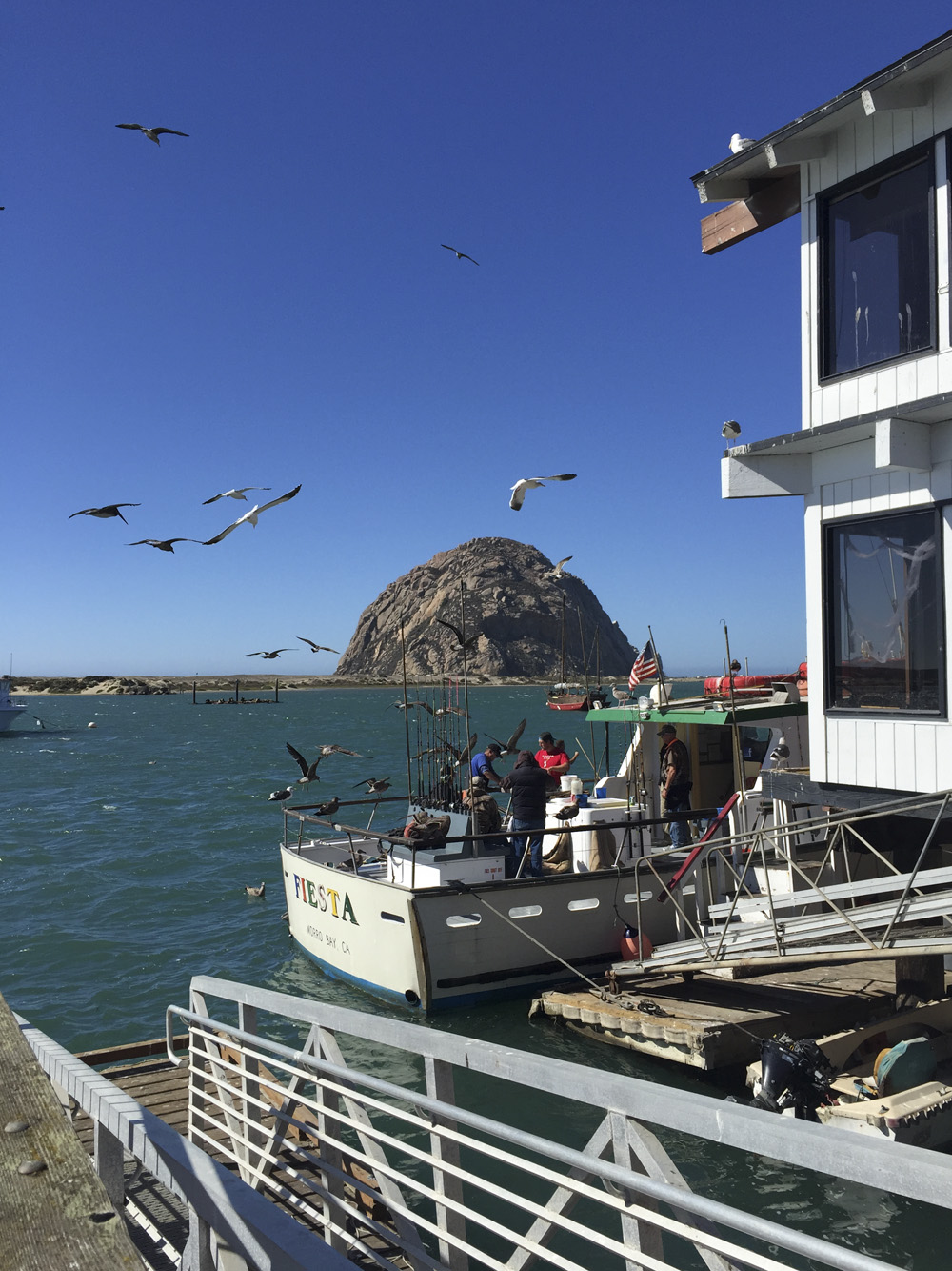 Morro Bay Rock & Seagulls