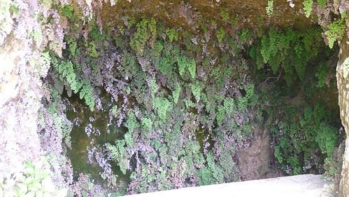 bewachsene Grotte (4476)