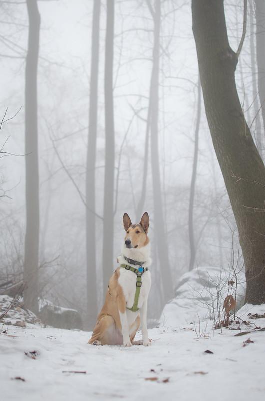 Fog & Snow & Dog