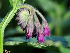Plantes sauvages / Wild plants