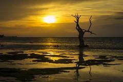 Dead Tree Sun