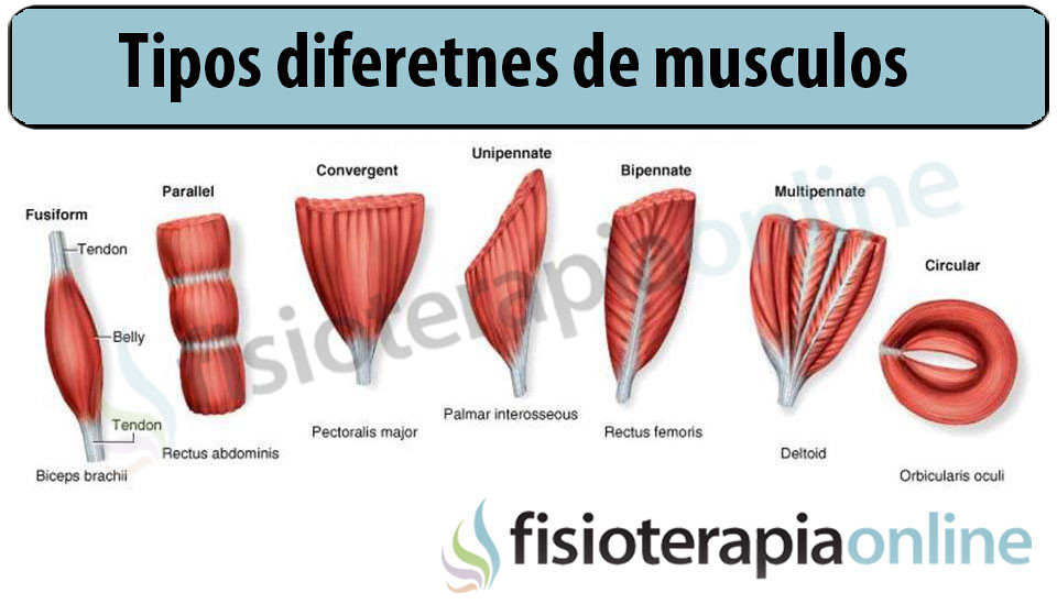 fisioterapia-onine\'s most interesting Flickr photos   Picssr