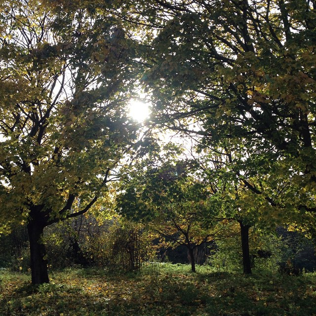 Along the edge of the East Marsh in Hackney this morning. #walk #autumn #London #dayoff