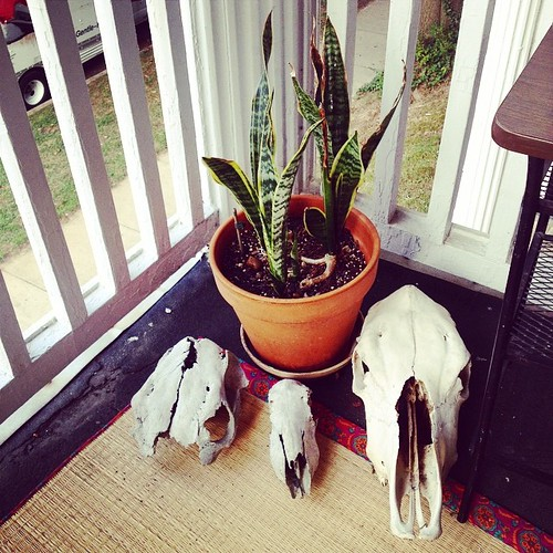 #skulls #bones #taxidermy #plants #decor #outside #morbid