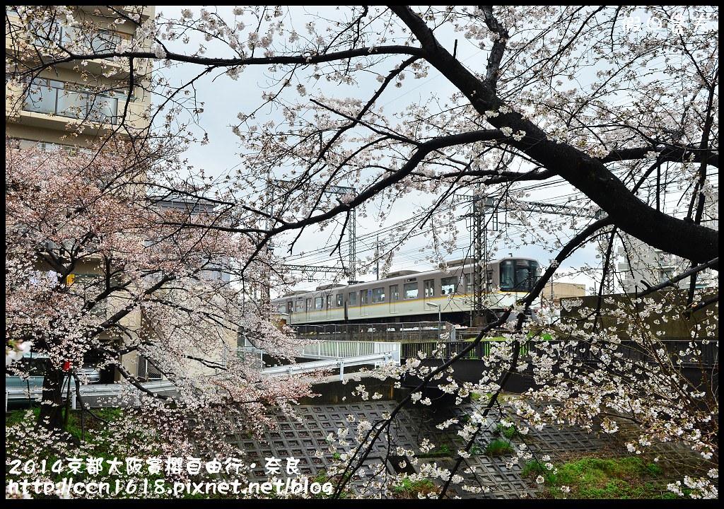 2014京都大阪賞櫻自由行.奈良DSC_0864
