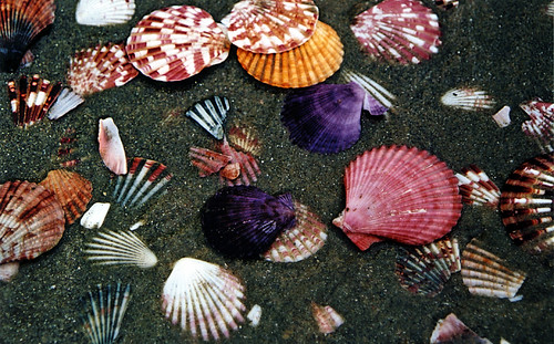 Mui Ne Fishing Village: Scallop Shells Litter the Beach