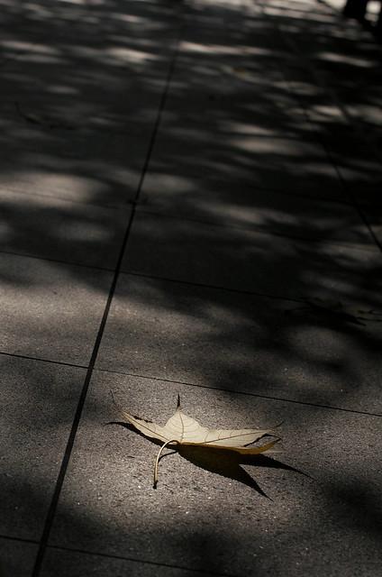 東京路地裏散歩 2014年11月22日