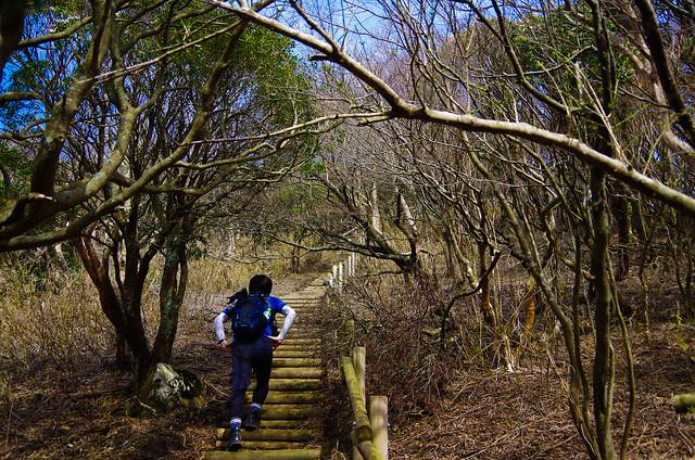 2014-03-31_00582_伊豆稜線トレイル.jpg