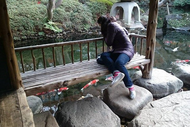 Me looking at the Koi